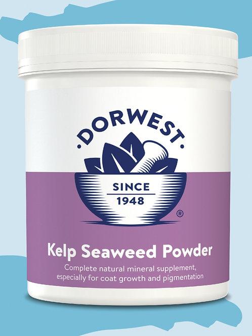 Kelp Seaweed Powder 20g