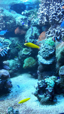 Freizeit -Sealife-