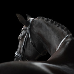 Serata Equine - Fine art perfection