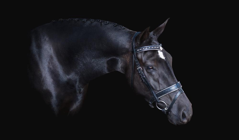 Horse-photography-australia
