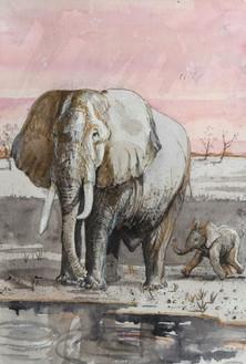 Elephant and Calf at Arathusa