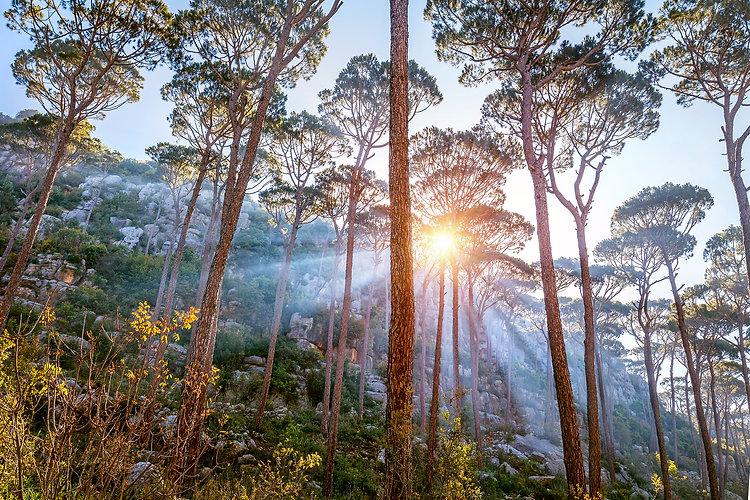 beautiful-forest-landscape-P96H6LK.jpg
