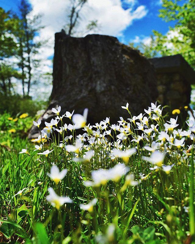 White Flowers | New Hampshire
