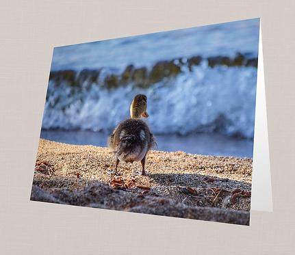 Baby Duck Butt Note Card