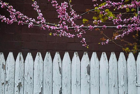 Fence of Flowers
