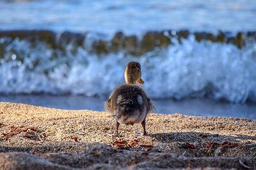 Baby Duck Butt