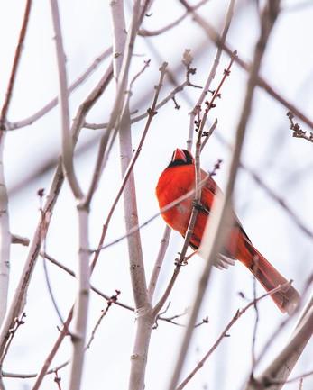 tweet tweet; starting to think spring mi