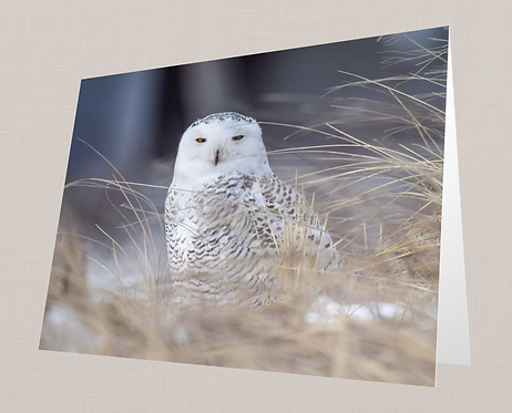 Snowy Owl Note Card