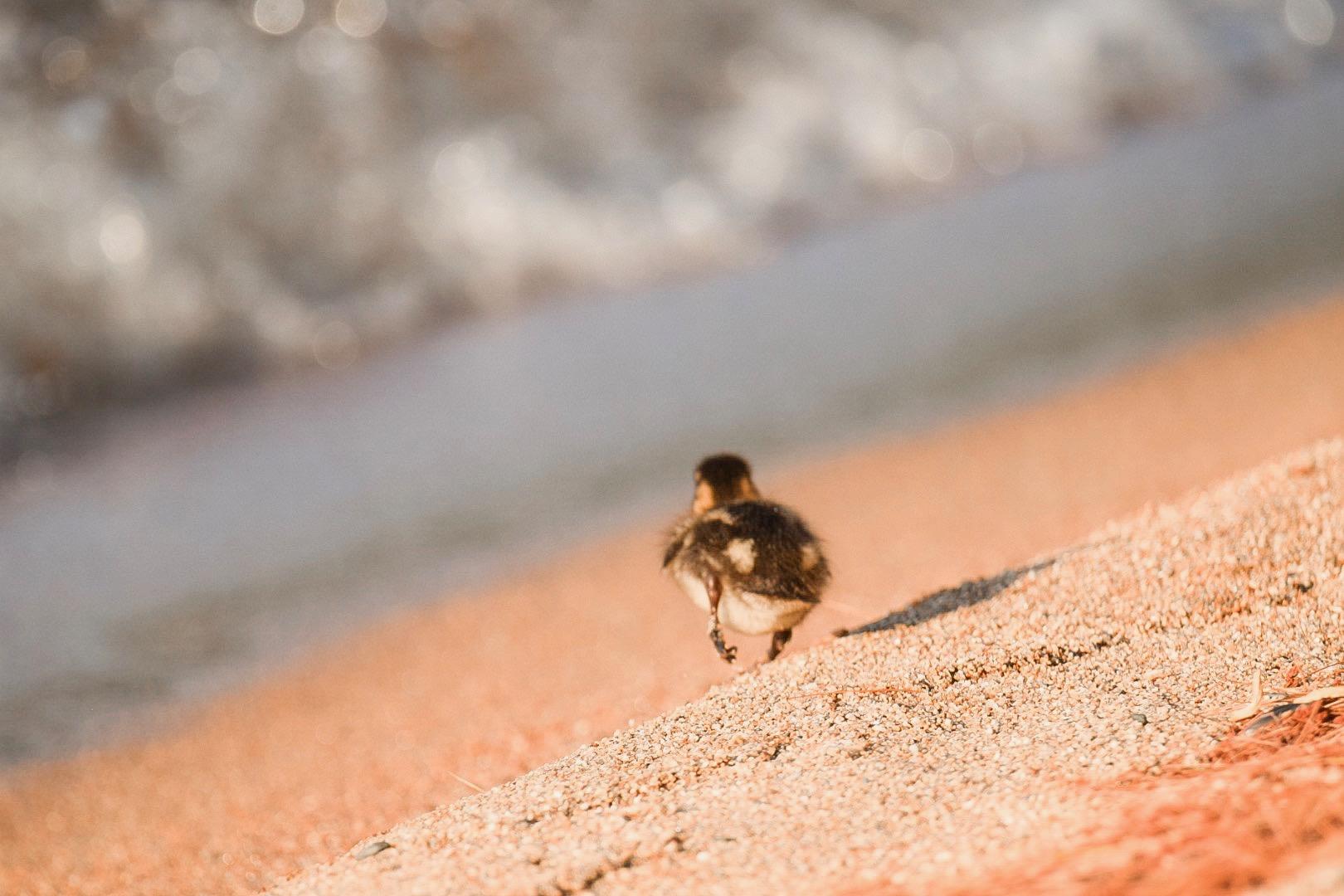 Baby Duck | Sebago Lake, ME