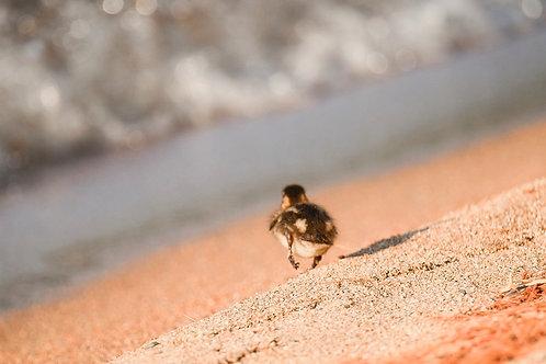 Run, Baby