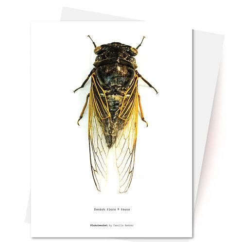 Flora & Fauna / Insekt