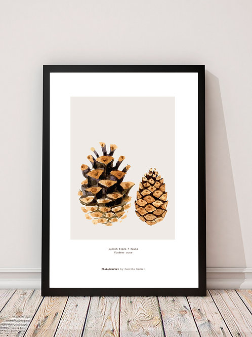 by nature / Conifer Cone