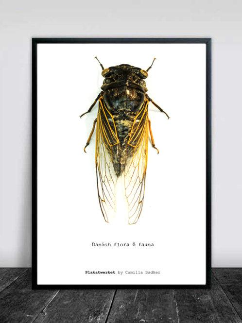 FLORA & FAUNA / Poster serie / Insekt