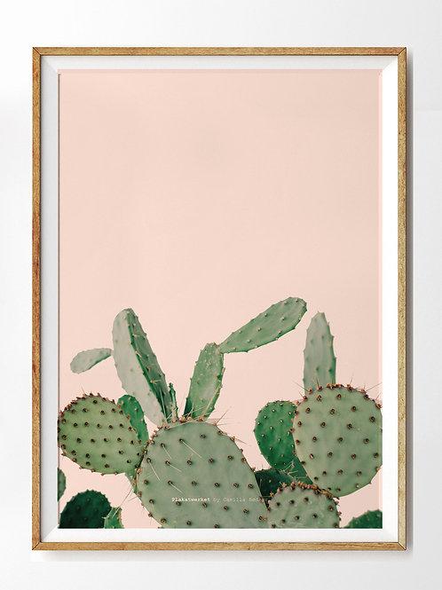 Green love, kaktus