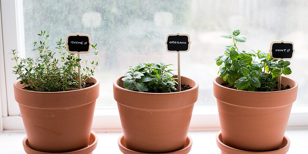 Paint and Pot Your Own Herb Garden
