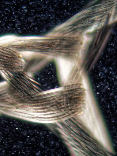 Knit construction under the microscope