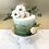 Thumbnail: Fresh Flowers