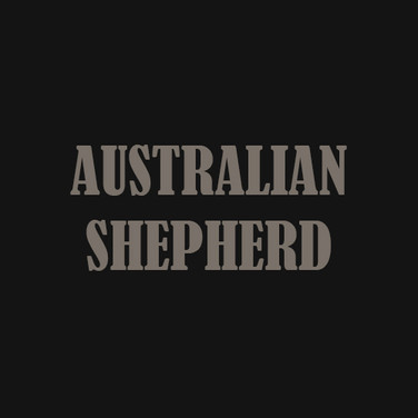 AUSTRALIAN SHEPHERD.jpg