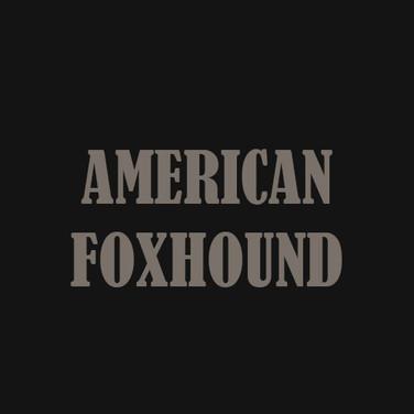 AMERICAN FOXHOUND.jpg