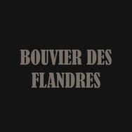 BOUVIER DES FLANDRES.jpg