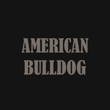 AMERICAN BULLDOG.jpg