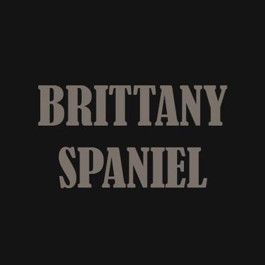 BRITTANY SPANIEL.jpg