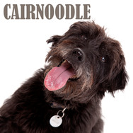 CAIRNOODLE.jpg