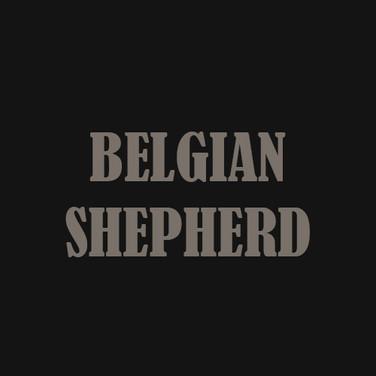 BELGIAN SHEPHERD.jpg
