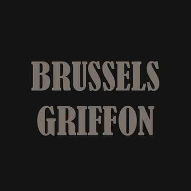 BRUSSELS GRIFFON.jpg
