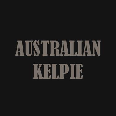 AUSTRALIAN KELPIE.jpg