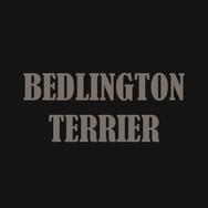 BEDLINGTON TERRIER.jpg