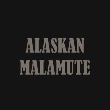 ALASKAN MALAMUTE.jpg