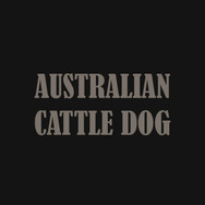 AUSTRALIAN CATTLE DOG.jpg