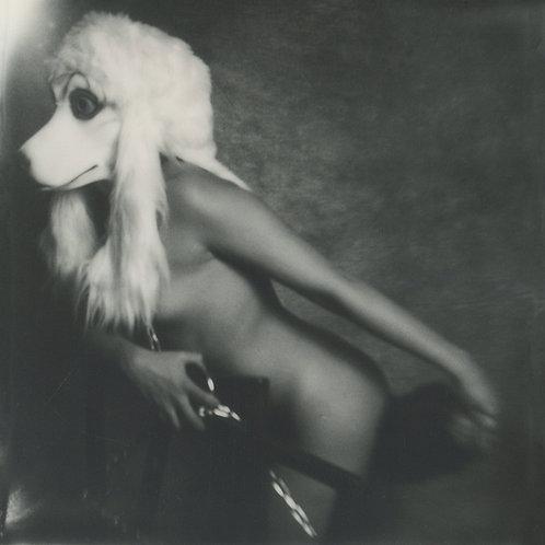 I wanna be your Dog - Polaroid