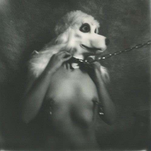 I wanna be your Dog - Polaroid