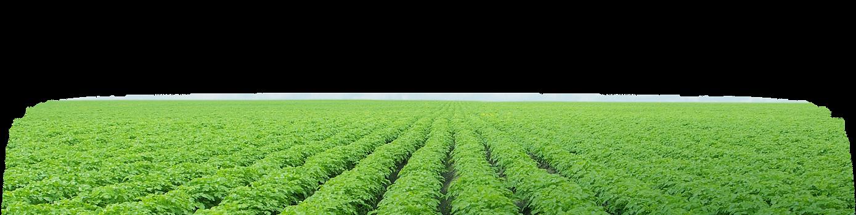 footer-crop-img.png
