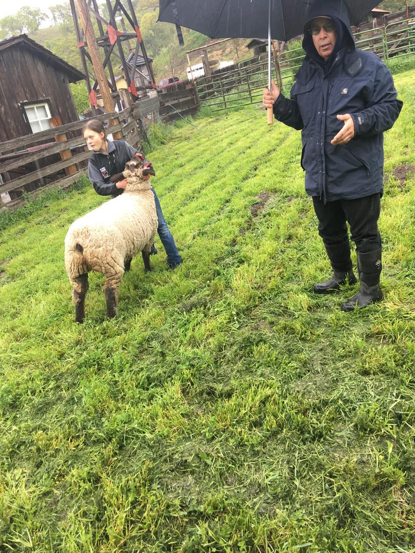 2017-2018 Showman Clinic Lamb