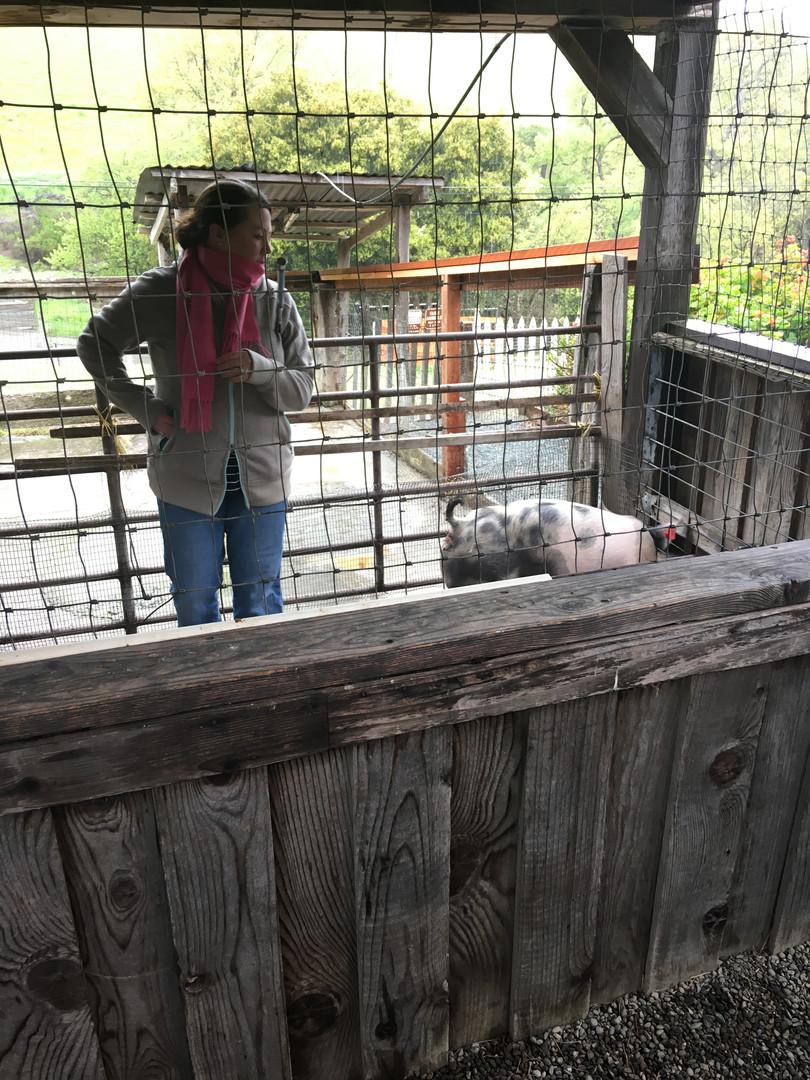 2017-2018 Showman Clinic Pig