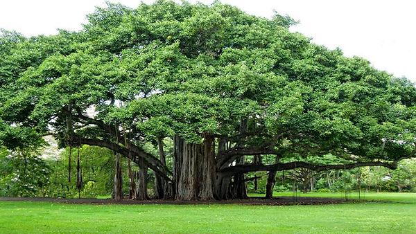 tree-myth.jpg