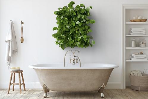 Living Plant Frame
