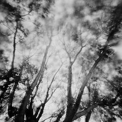 078_Pandemic_Trees_112382_001_print_sm.j