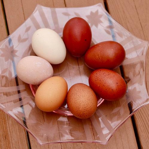 Farm Fresh Pasture Eggs