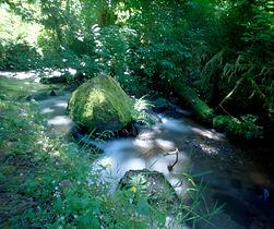 Munson Creek, Munson Creek Falls State Park, Oregon 2017