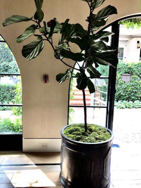 Moss as decor
