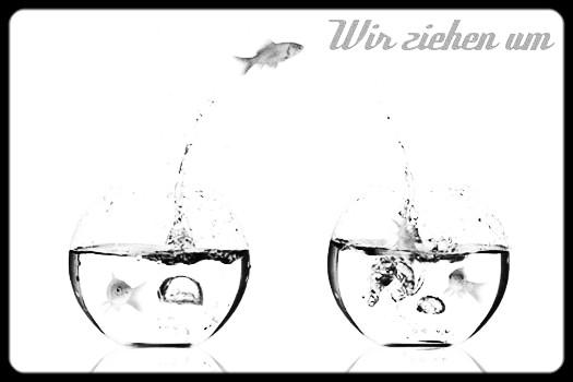 umzug3_edited.jpg