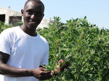Quinoa, igihingwa Habiyaremye ari gukoraho PhD kirwanya inzara n'imirire mibi