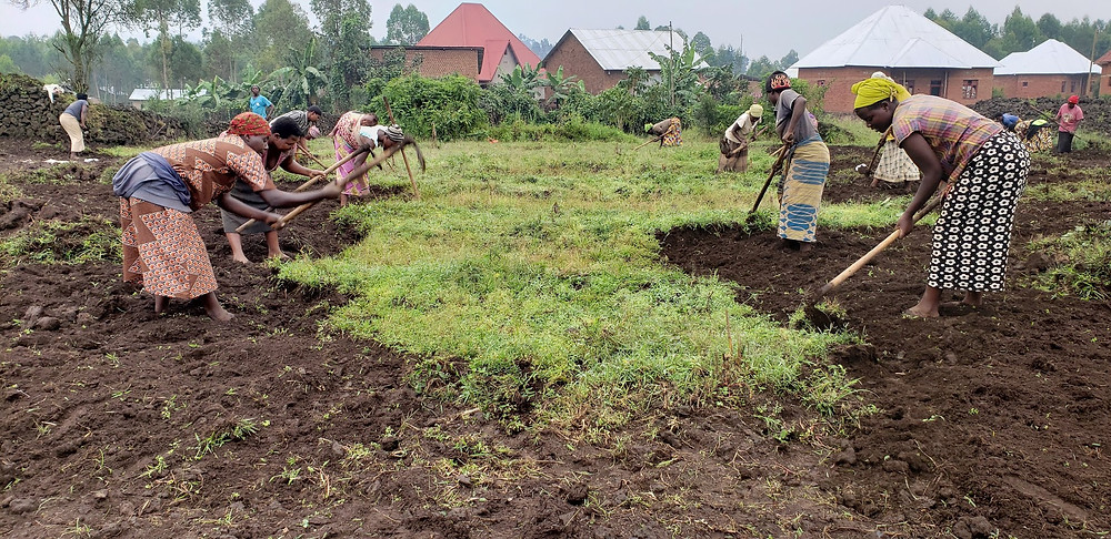 Local farmers work on the land preparing for quinoa variety trials just outside Volcanoes National Park, northern Rwanda in Musanze District on March, 2020 [Photo Credits: Cedric Habiyaremye]