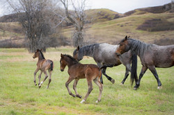 Mares and Foals 004 May 2k19