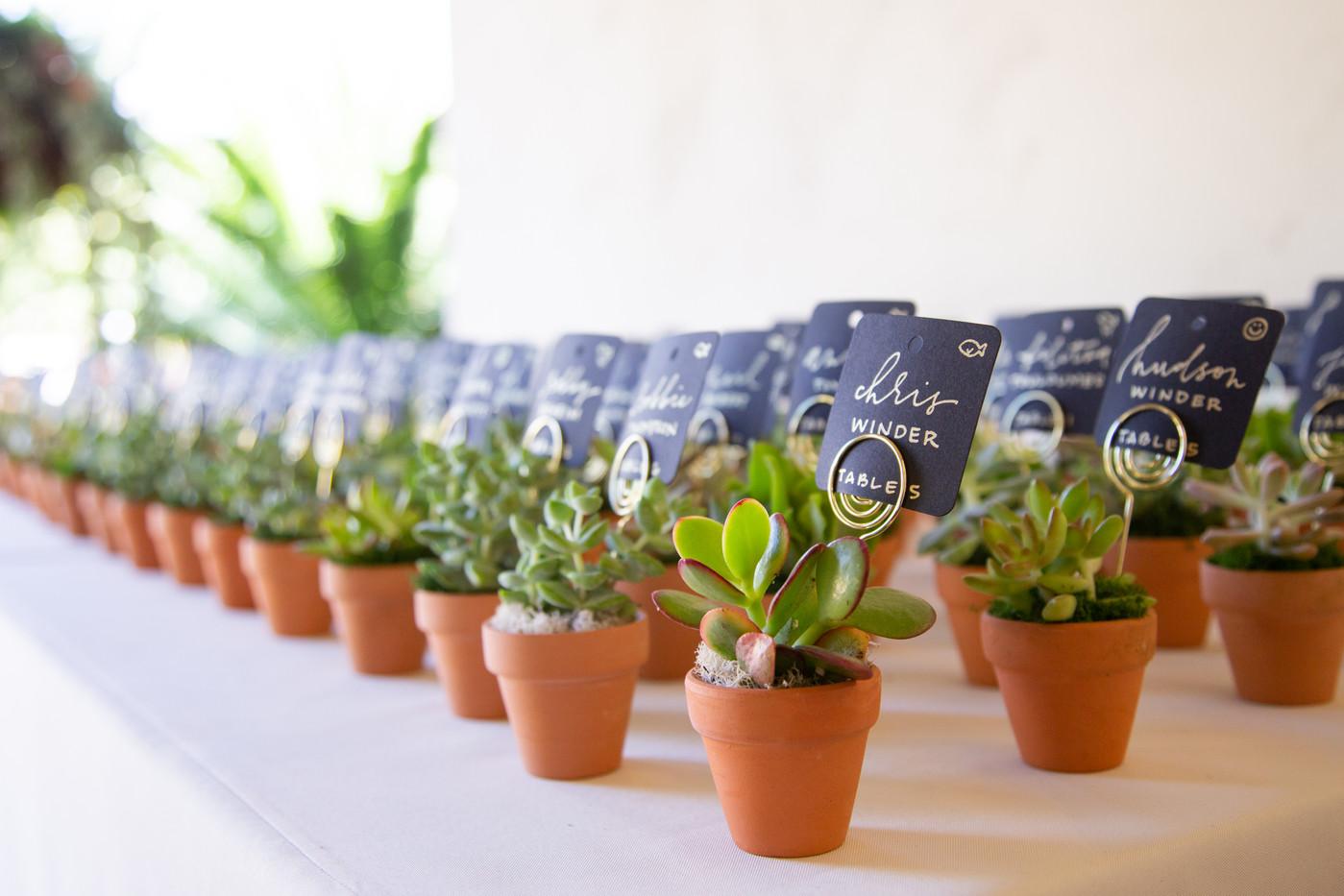 Escort succulents