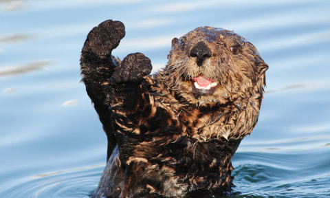 Play [and how to learn lessons from otters]